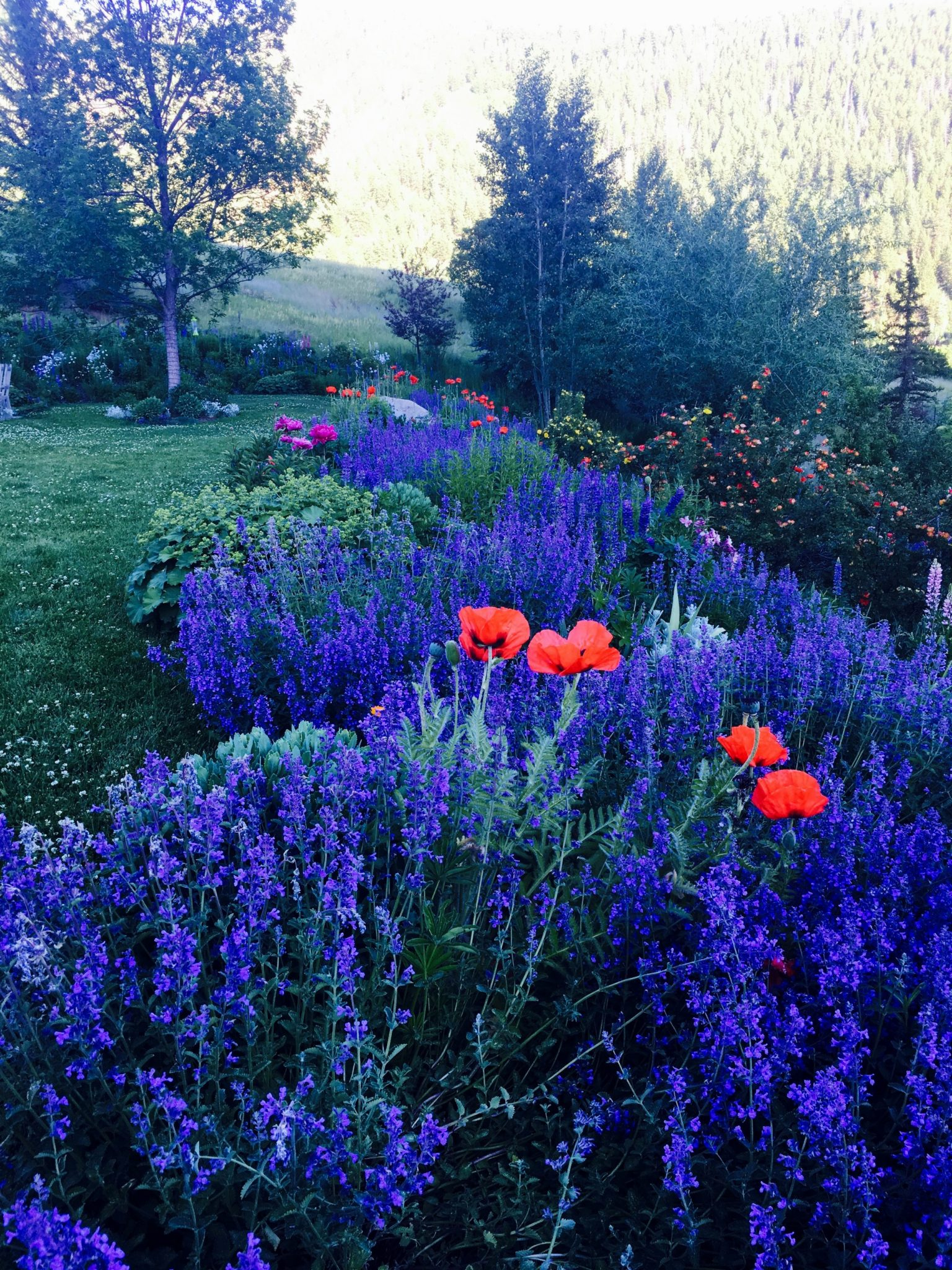 Alpenglow in the Mojo Gardens