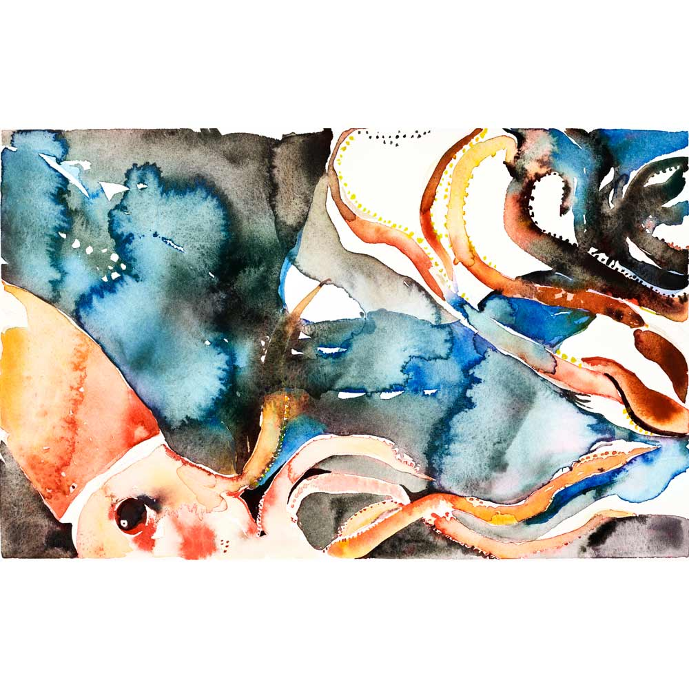 jewel squid watercolor painting with an orange and red squid in a dark blue and black splotchy watercolor background