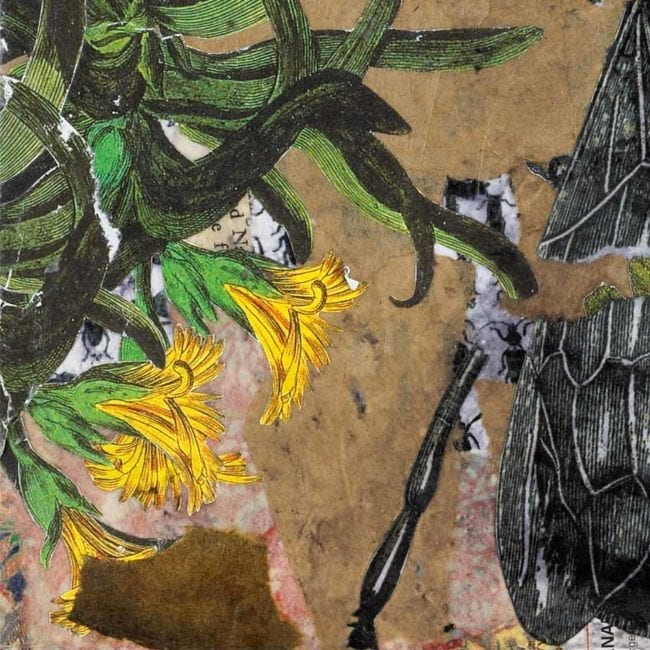 close up of a mixed-media piece with torn brown paper, a botanical illustration of yellow flowers with green leaves, and the leg and wing of a black and white illustration of a bee