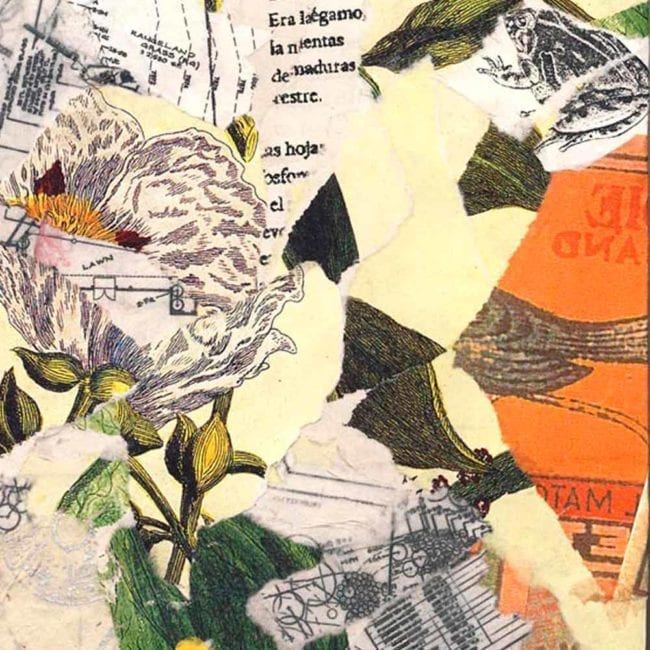 close up of the regeneration mixed media collage with torn beige, white, yellow, and orange paper with botanical illustrations and an illustration of a frog