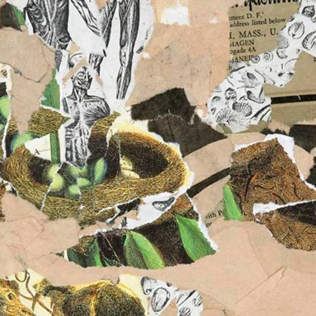 close up of the mixed media collage shelter focussed on a few black and white anatomy diagrams, some torn images of green eggs in a nest, as well as torn typography and pink tan paper in the background