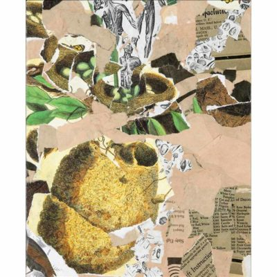 mixed media collage shelter with torn pieces of tan pink paper, green botanical illustrations, and a large illustration of a wren's nest