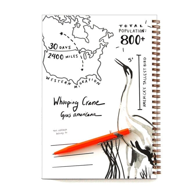 Interior cover of a Whooping Crane theme notebook, featuring a sketch of a crane, and fun facts: they migrate 2400 miles in 30 days, there are only about 800 of them left, and they are America's tallest bird at about 5 feet tall