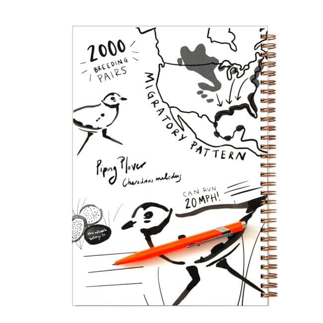 Inside cover of a Piping Plover notebook, with sketches of plovers, a map of their migratory pattern, and fun facts: they can run 20 miles per hour, and there are only 2000 breeding pairs left