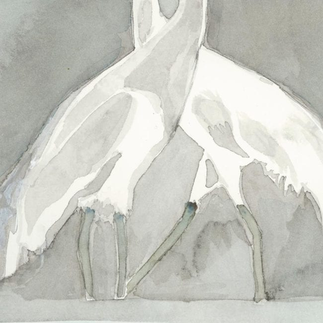 detail of two whooping cranes legs and bodies with gray background
