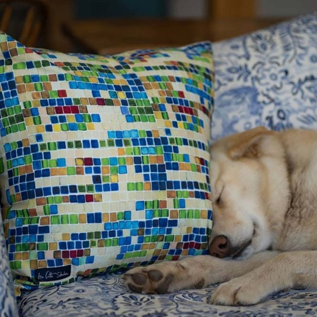sleeping dog on couch with head against colorful pillow with geometric squares of blue, green, yellow and a bit of dark red