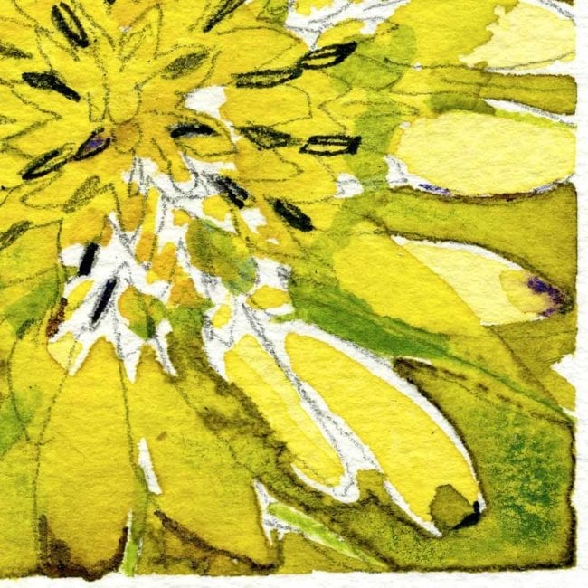 close up of the watercolor painting of a yellow flower with dark seeds, detailed petals, and a green background