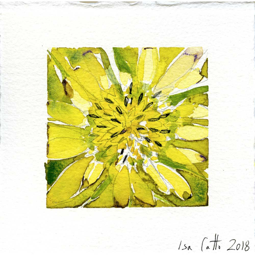 watercolor painting of a yellow flower with dark seeds, detailed petals, and a green background with the artist's signature inscribed below the painting