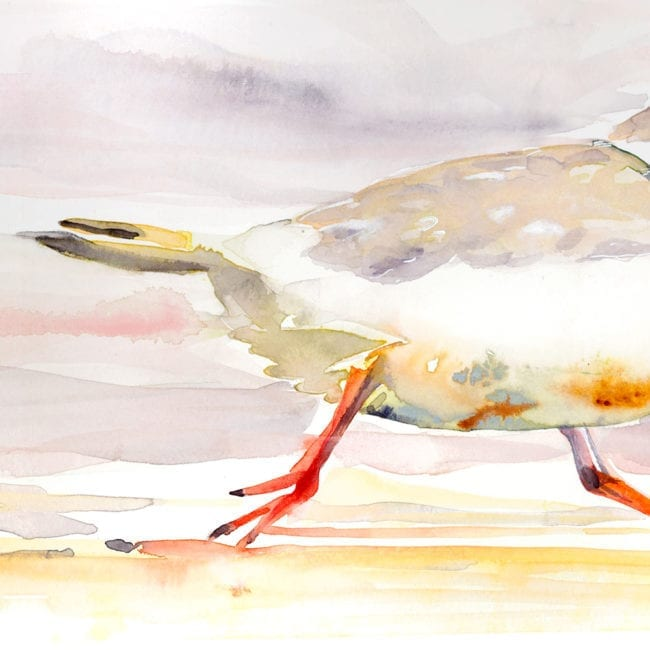 detail of sandy piping plover with orange legs