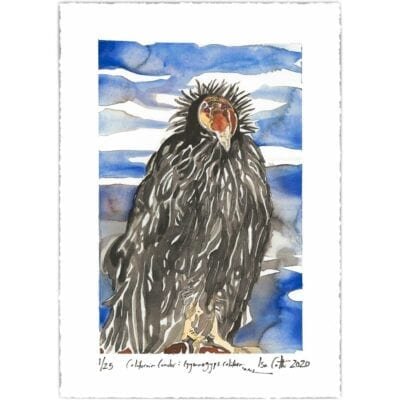 california condor digital print with signatures