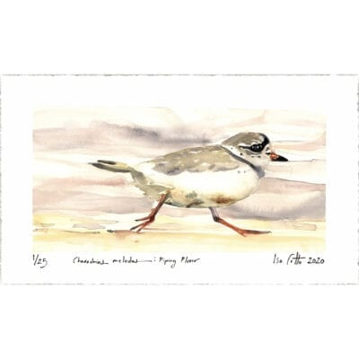 piping plover digital print with signatures