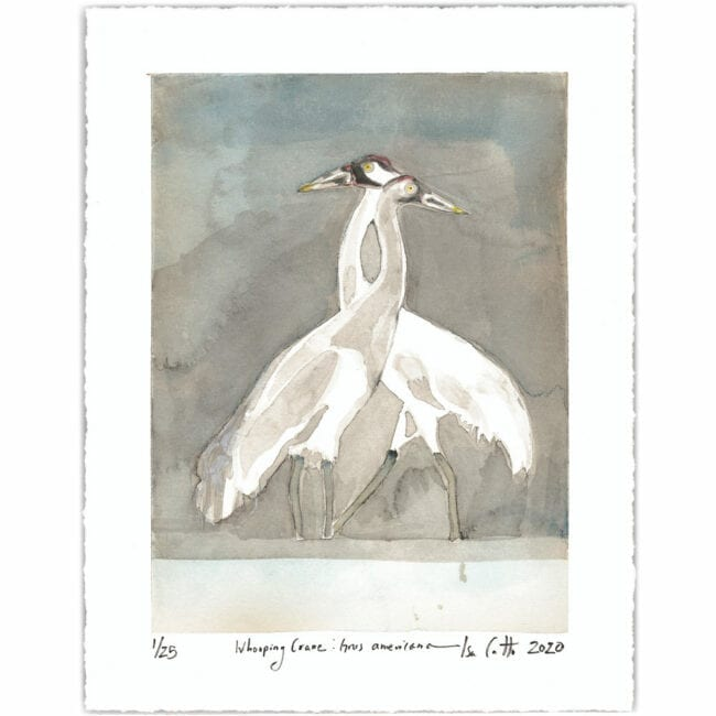 whooping crane digital print with signatures