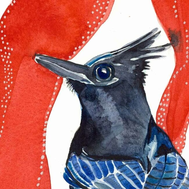detail of blue and black bird's head with a black crown on a red organic background watercolor