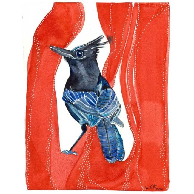 blue and black bird with a black crown on a red organic background watercolor