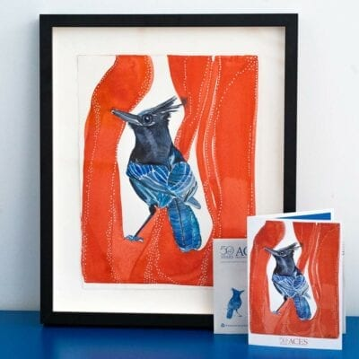 stellers jay painting with red background in a black frame with a matching card