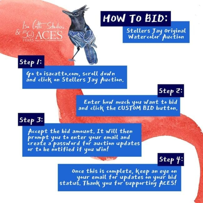 graphic explaining how to bid in the auction for the blue colored bird with a red background
