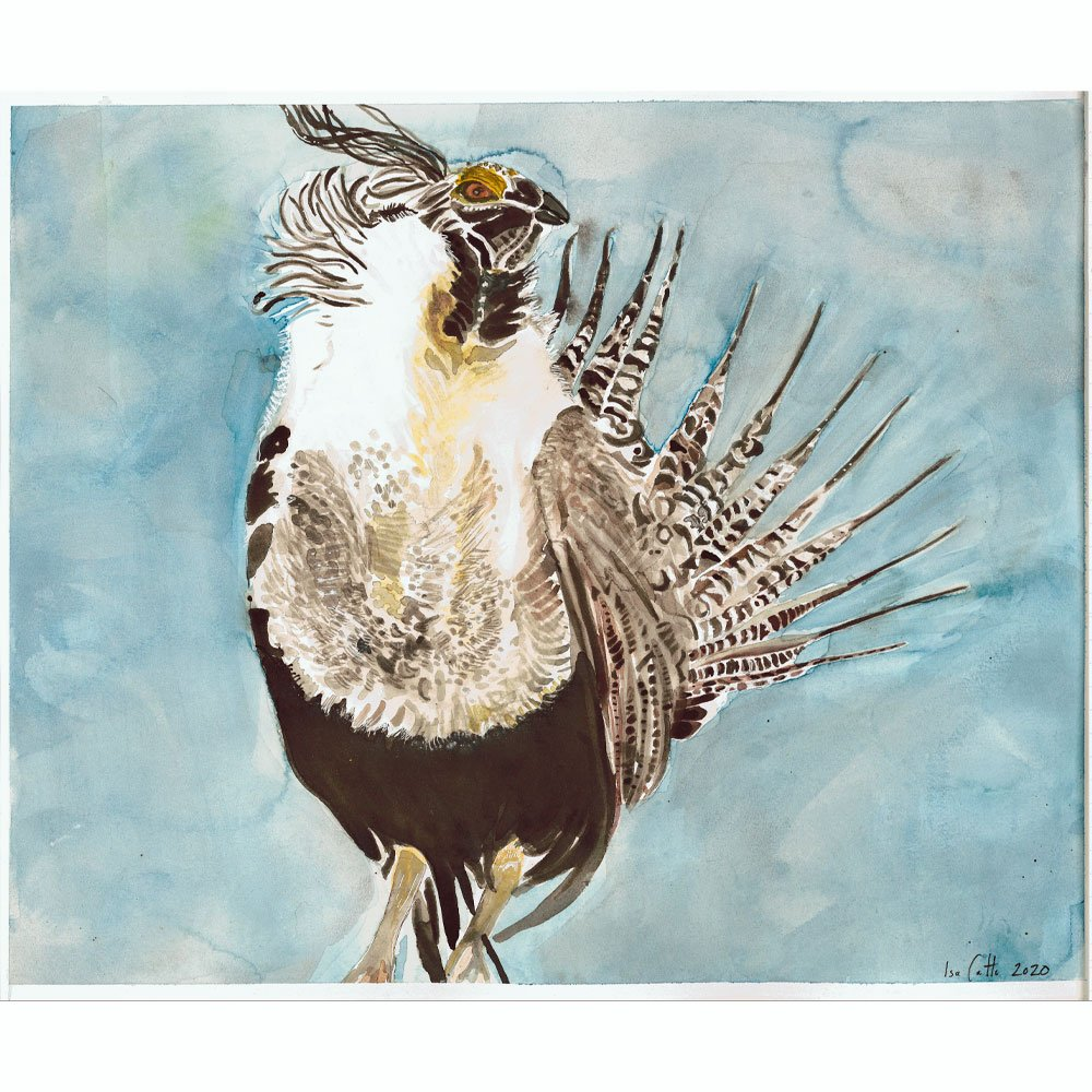 Painting of a brown and white Gunnison-Sage Grouse on a light blue background