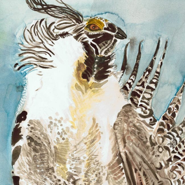 close-up of a painting of a Gunnison-Sage Grouse featuring it's head