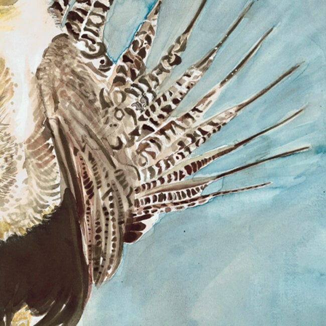 close-up of a painting of a Gunnison-Sage Grouse featuring it's tail feathers