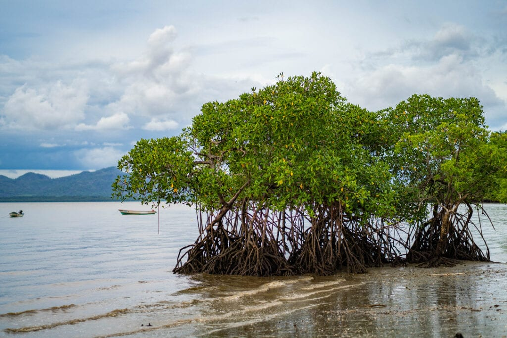 mangrove trees on the beach with boats in the water in the distance