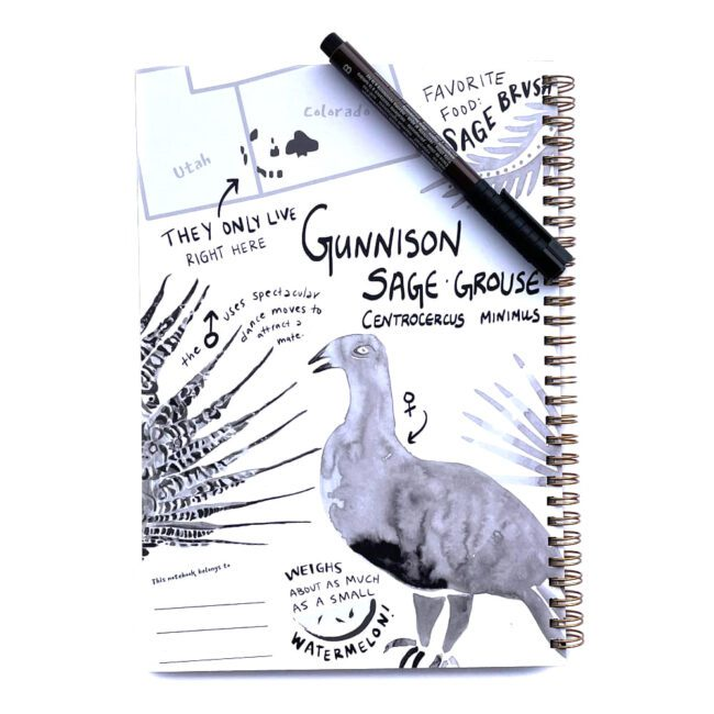 inner cover of a wire notebook with ink illustrations of a grouse